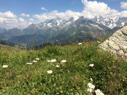 bloemenweide met Mont Blanc-massief op de achtergrond