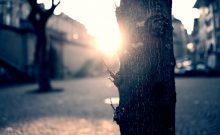 boomstam met tegenlicht op een stadsplein